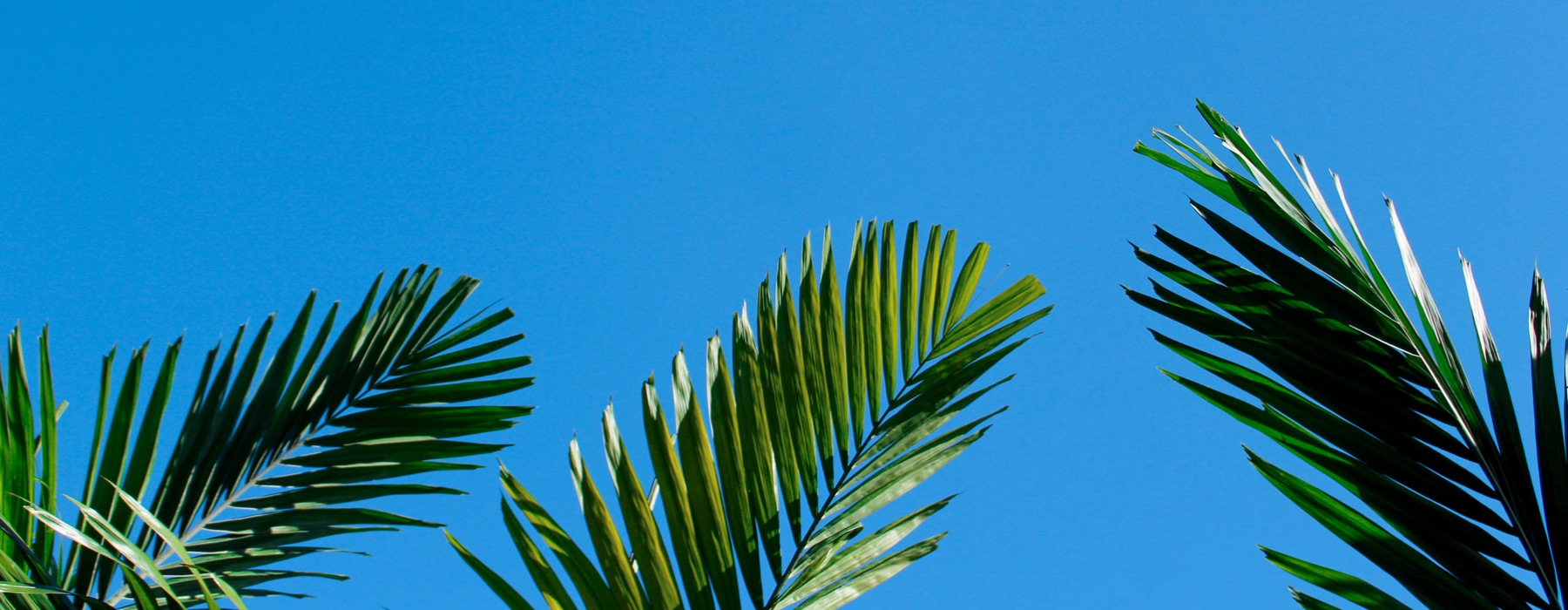 artsy shot of palm tree and sky